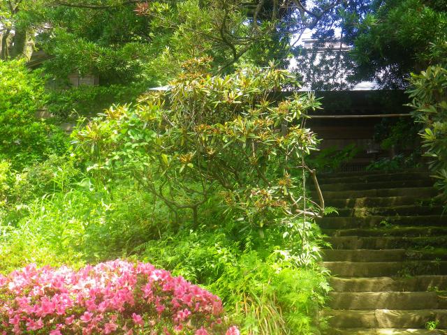 13) 今日は公開日ではない、阿弥陀堂前の階段。(高邁日でなくとも、右側の階段を最上段まで上ること可。) 18.06.01 六月初日の 鎌倉「浄光明寺」 オヨヨ!早っ!一部の萩が咲いてた
