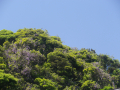 05-1) 写真下段左と右の山藤を撮った    _ 18.04.28 鎌倉 ' 笹目谷 ' の山藤 _ 鎌倉市笹目町
