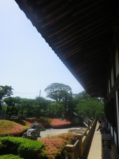 01)    18.05.15 鎌倉「光明寺」 石庭にサツキが咲き始めたヨ
