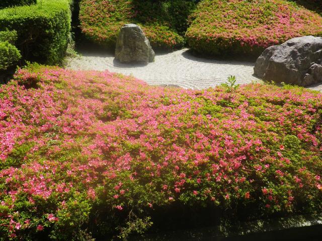 03)    18.05.15 鎌倉「光明寺」 石庭にサツキが咲き始めたヨ