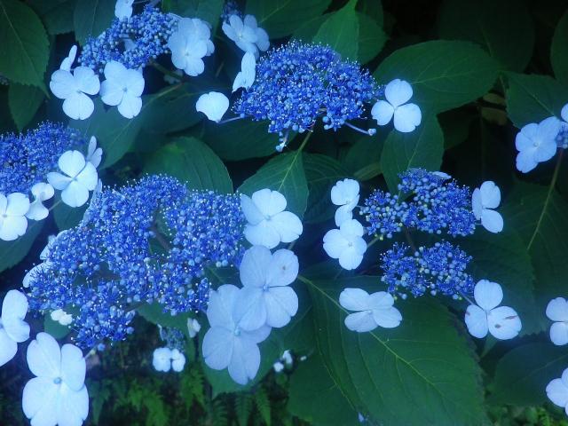 05-2)18.06.01 六月初日の 鎌倉 ' 亀ヶ谷坂 '
