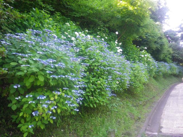 06)18.06.01 六月初日の 鎌倉 ' 亀ヶ谷坂 '