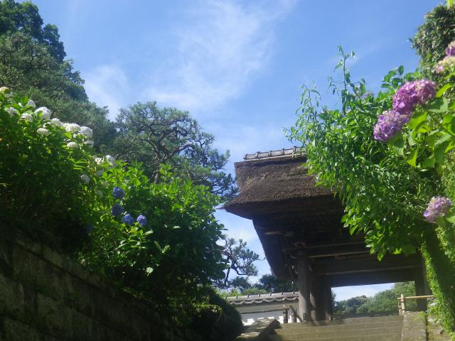 01-1)    18.06.01 六月初日の 鎌倉「長寿寺」
