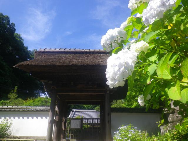 01-2)    18.06.01 六月初日の 鎌倉「長寿寺」