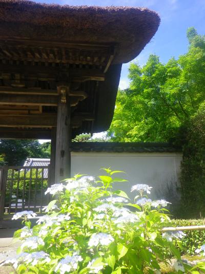 01-3)    18.06.01 六月初日の 鎌倉「長寿寺」