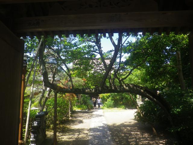 03) お約束の!???この写真 _ 18.06.04 六月に入って直ぐの 鎌倉「教恩寺」