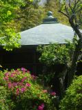 06) _ 18.04.19 鎌倉「浄光明寺」のツツジ
