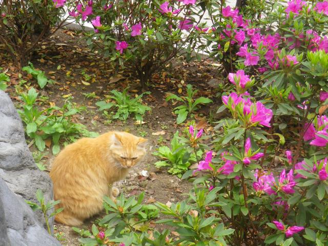 01-1)    18.04.24 入館せずに、「鎌倉歴史文化交流館」の門番?ネコを撫で撫で & トンネルの先を確認