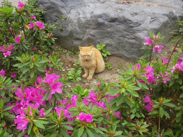 01-2)   18.04.24 入館せずに、「鎌倉歴史文化交流館」の門番?ネコを撫で撫で & トンネルの先を確認