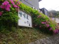 01)    18.04.24 鎌倉「甘味処 茶房 雲母(きらら)」