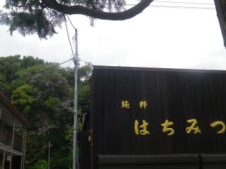 01)    18.04.24 鎌倉 ' 今小路 ' から見つけた崖の山藤