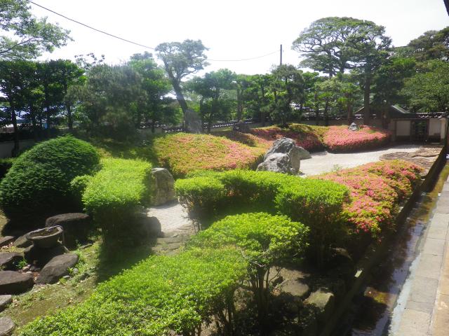 02)    18.05.15 鎌倉「光明寺」 石庭にサツキが咲き始めたヨ
