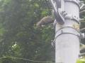00)    18.05.25 栗鼠(りす)が、ずぅ~~~っと鳴いていた。