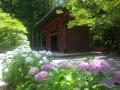 12-1) 境内の西洋アジサイ  _ 18.06.04 鎌倉「妙本寺」紫陽花が咲く頃