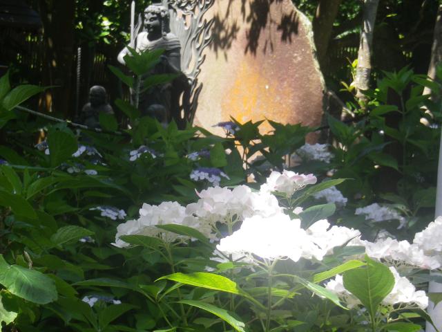 11) 山門を潜ってからの境内   18.06.08 紫陽花の寺から 萩の寺になる ' らしい ' 鎌倉「成就院」