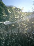 05)    08.02.15鎌倉市二階堂「瑞泉寺」梅の季節