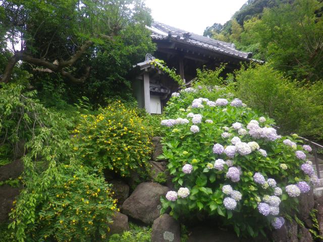 01-1)    18.06.14 鎌倉「覚園寺」参拝