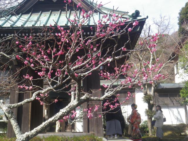 05-1)  _ 19.02.07 立春直後の鎌倉「海蔵寺」
