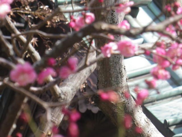 06-2)  _ 19.02.07 立春直後の鎌倉「海蔵寺」