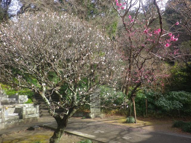 06-1) _ 19.02.07 立春直後の鎌倉「妙本寺」