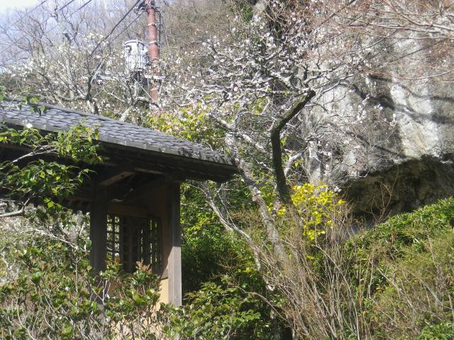 03-1)  _ 19.02.07 立春直後の鎌倉「海蔵寺」