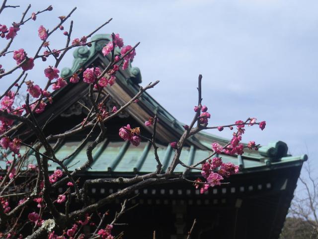 05-2)  _ 19.02.07 立春直後の鎌倉「海蔵寺」