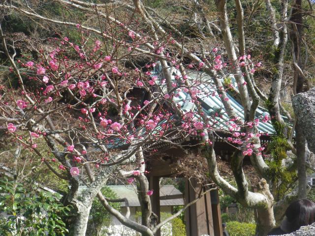 06-1)  _ 19.02.07 立春直後の鎌倉「海蔵寺」