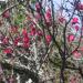 02-2) 参道階段の左側法面    _ 19.02.07 立春直後の鎌倉「荏柄天神社」