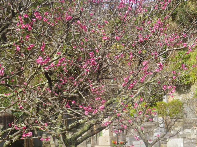 05-1) _ 19.02.07 立春直後の鎌倉「妙本寺」