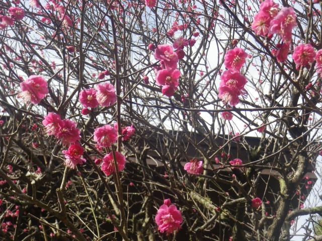 05-2) _ 19.02.07 立春直後の鎌倉「妙本寺」