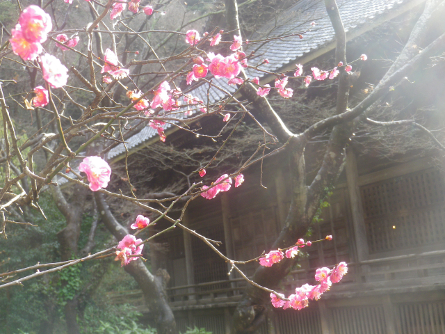 07-2) _ 19.02.07 立春直後の鎌倉「妙本寺」