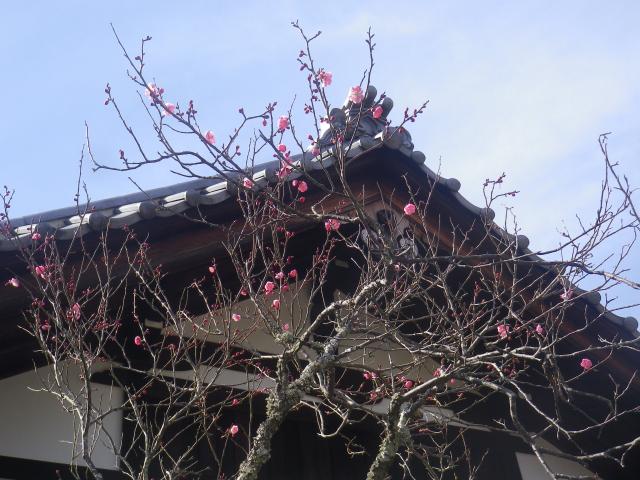04-1) _ 19.02.07 立春直後の鎌倉「浄光明寺」