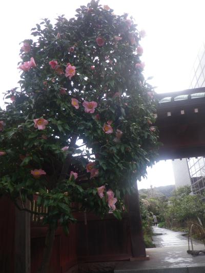 07-1)    _ 19.02.07 立春直後の鎌倉「大巧寺」
