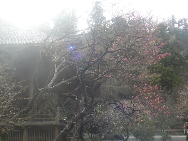07-1) _ 19.02.07 立春直後の鎌倉「妙本寺」