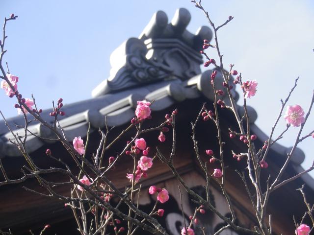 04-2) _ 19.02.07 立春直後の鎌倉「浄光明寺」