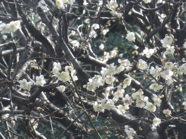 04-2)    _ 19.02.07 立春直後の鎌倉「大巧寺」