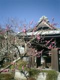 02)鎌倉市扇ガ谷「海蔵寺」鐘楼を観る