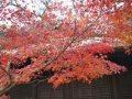 06)   09.12.05鎌倉市材木座「長勝寺」 冬