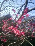 06)鎌倉市大町「妙本寺」近過ぎたけど、マァいいやぁ!写真が趣味ではないしぃ!
