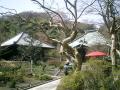 05)    05.04.06  鎌倉「海蔵寺」