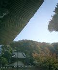 01)    07.11.25 鎌倉「光明寺」参拝、強い陽光だった初冬の或る日。