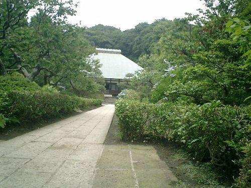05)   08.06.28 鎌倉「浄妙寺」紫陽花の季節