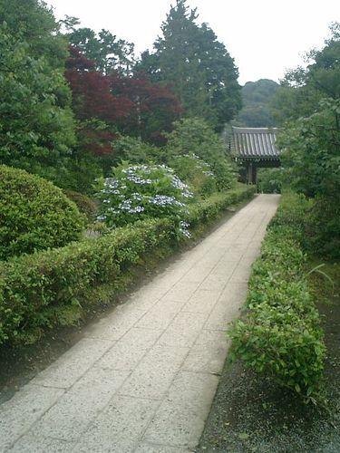08)  08.06.28 鎌倉「浄妙寺」紫陽花の季節