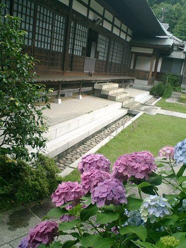 13)  08.06.28 鎌倉「浄妙寺」紫陽花の季節