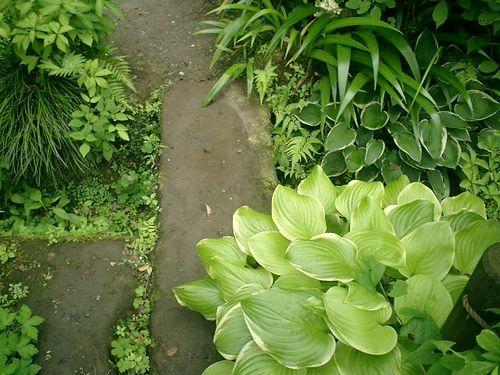 30)  08.06.28 鎌倉「浄妙寺」紫陽花の季節
