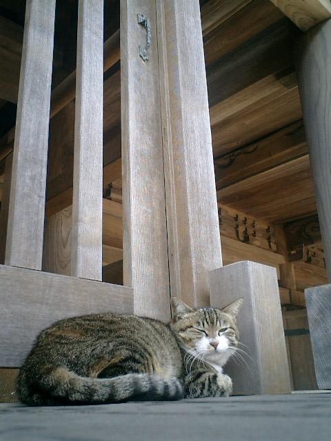 01)いつもの山門補助階段で寝ていた'バーナード・パーディ'。頭を床につけて寝ていたのだけれども、カメラを向けたら「早く撮っちまえヨォ」ってな感じで頭をあげた。撮り終わったら