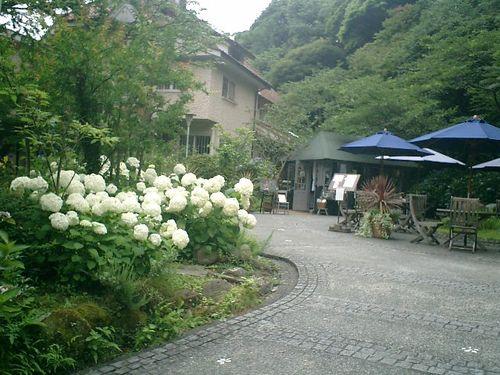 25)  08.06.28 鎌倉「浄妙寺」紫陽花の季節