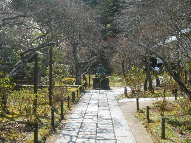 08) 花が散り去った、梅の枝トンネル。  _ 21.03.17G 鎌倉「東慶寺」 枝垂れ桜が満開な頃