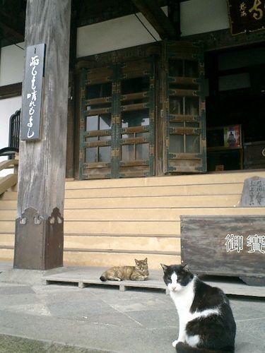 01)「雨もよし晴れもよし」'トラシマ2号'&'デイブ平尾'