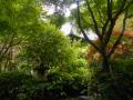 05) 庫裡玄関前から、本堂屋根上方。  _ 21.05.22A 鎌倉「光則寺」 鉢植のヤカアジサイが色づき始める頃 鎌倉市長谷